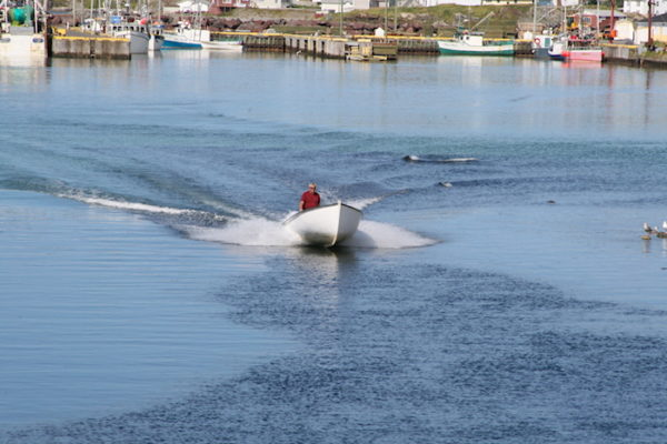 This motor boat is off to catch cod during Twillingate's summer recreational fishery.