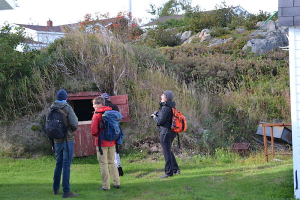 Root Cellar in Twillingate