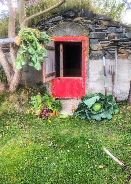 Root cellar and root vegetables
