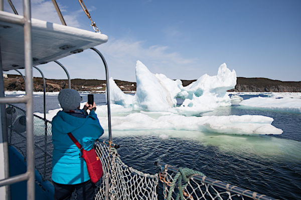 Iceberg Boat Tour in Twillingate