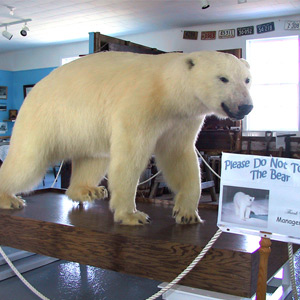 Polar bear exhibit in Durrell Museum